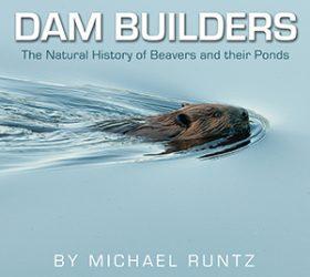 dam builders