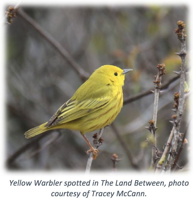 Attracting Year-Round Birds To Your Backyard