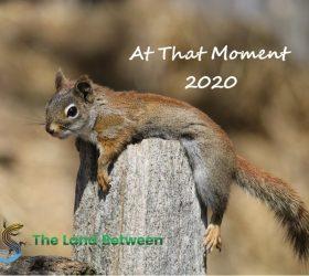 2020 TM Calendar cover
