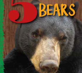 5 Bears