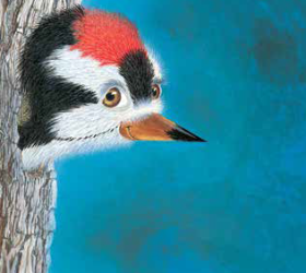 A woodpeckers tail